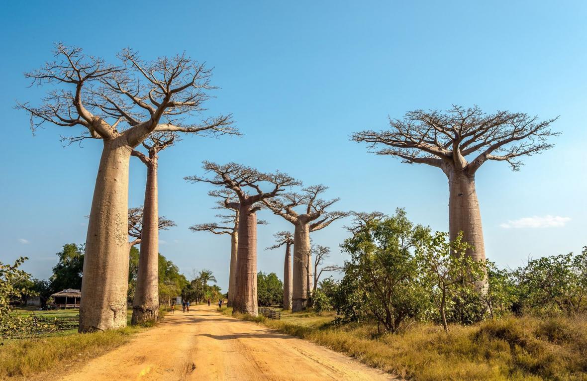 راهنمای سفری ماداگاسکار آفریقا