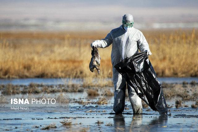 کانونی از آنفلوآنزای فوق حاد پرندگاندر کرمانشاه شناسایی نشده است