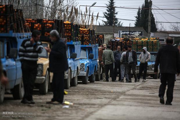ظرفیت 777 هزار تنی سورتینگ مرکبات در مازندران