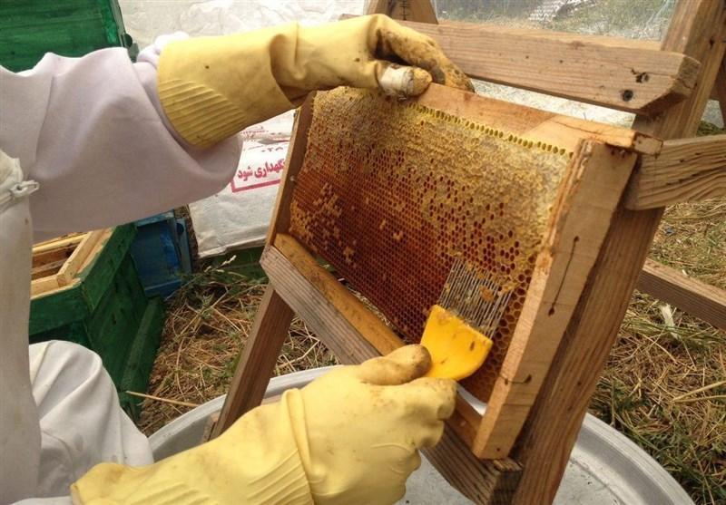 شیرینی کام زنبورداران با افزایش فراوری عسل