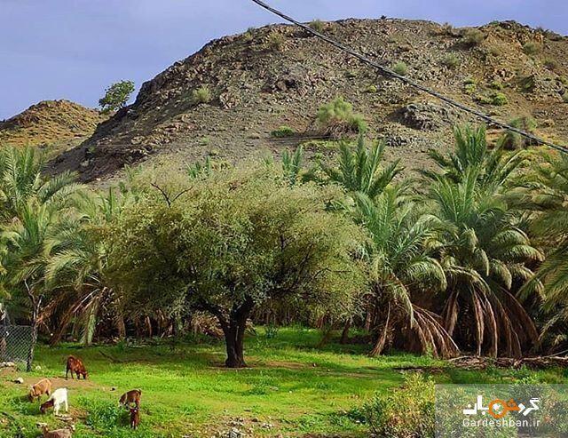 روستای کوهشاه ریگان؛ نگین گردشگری در دل کویر، عکس